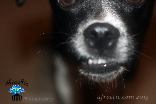 My dog Djangosmiles!